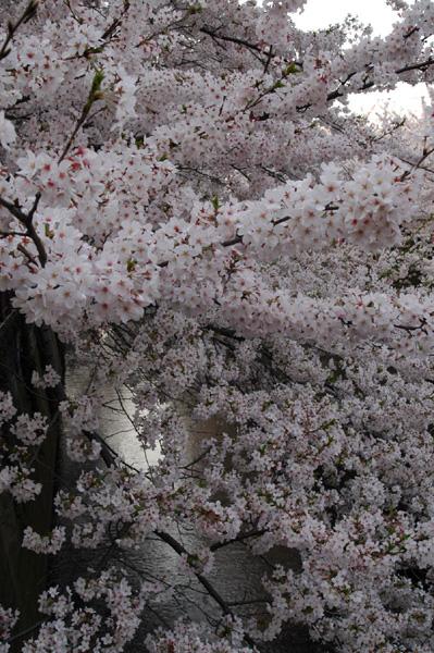 桜橋にて撮影